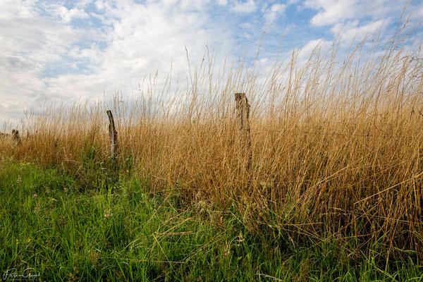 Landscape 2020 ©Peter Gegel