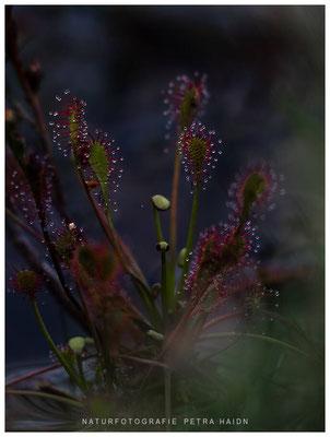 Galerie - Pflanzen - 38