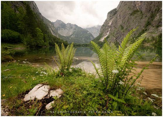 Heimatfotos - Berchtesgaden - 100
