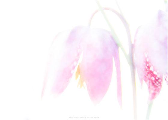 Galerie - Pflanzen - 88
