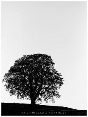 Galerie - Pflanzen - 16