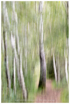 Galerie - Abstrakt - 24