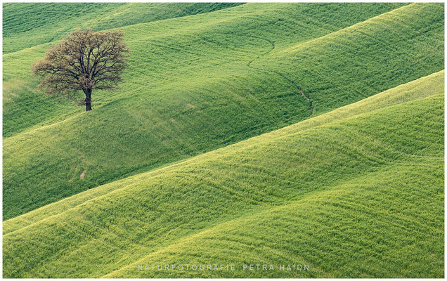Galerie - Landschaft - Toskana - 42