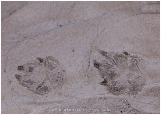 Galerie - Landschaft - Spitzbergen - 22
