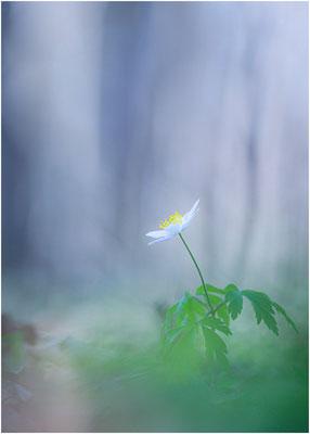 Galerie - Pflanzen - 95