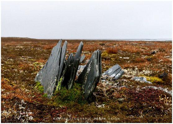 Galerie - Landschaft - Spitzbergen - 18