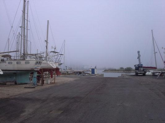 dann kommt sogar für einen Tag der Nebel in die Camargue