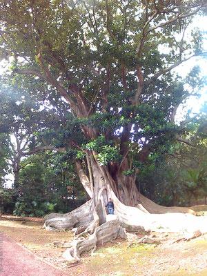 Giganten (botanischer Garten)