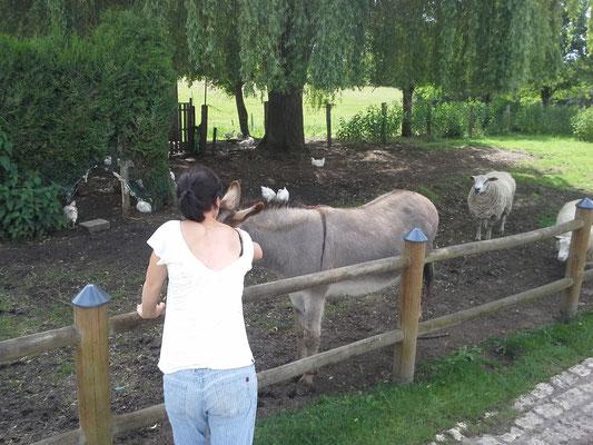 Esel an der Schleuse