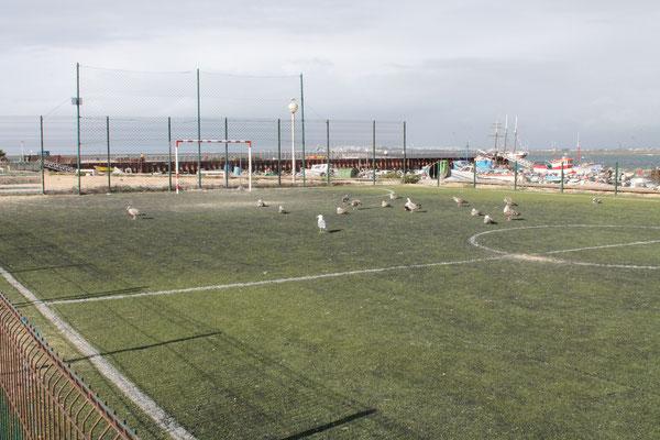 Isla Caleta Soccer Team