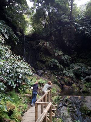 Urwald mit Wasserfall (klein)