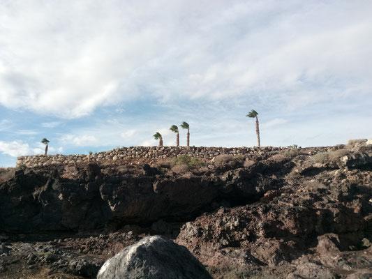 Palmen stehen auf Sturm
