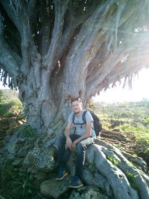 Rastplatz unterm Drago (Drachenbaum)
