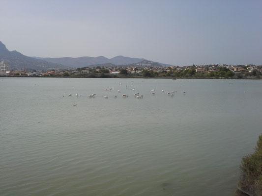 Puerto de Calpe überrascht mit vormaligem Salinensee und ortsansässigen Flamingos, ausserdem mit einer deutschen Bäckerei (nicht zu sehen hier)