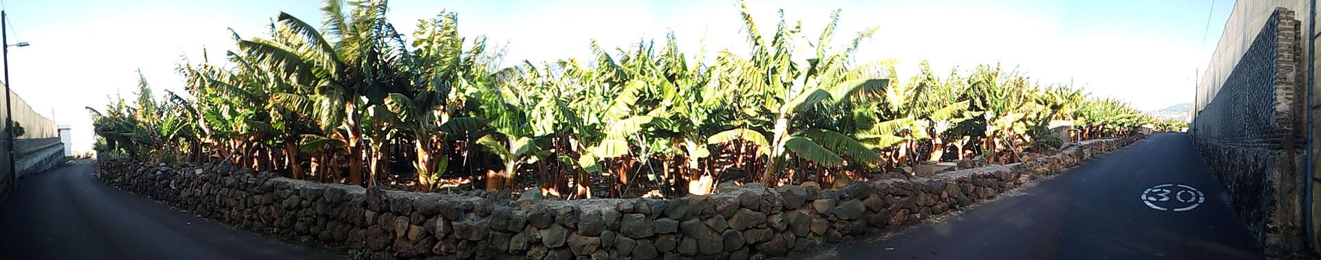 Plantagen überall