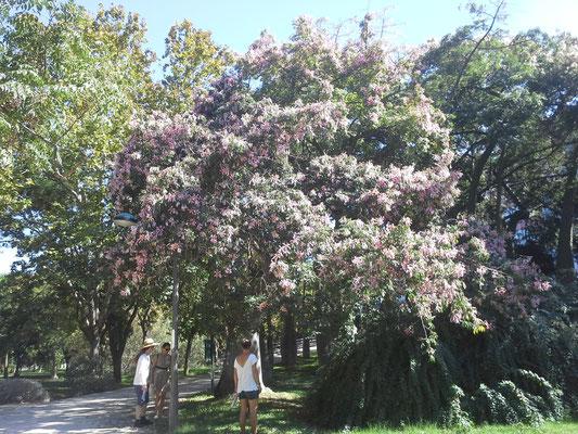danach geht´s durch den Jardin del turia
