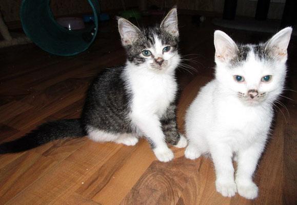 Laila & Nici