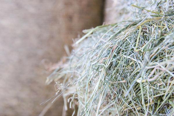 Unser frisches Schwinger-Wiesenheu, eigene Ernte, trocken gelagert, Lieferung Deutschlandweit nach Absprache möglich