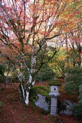 旧竹林院(この木の下で撮影可能)