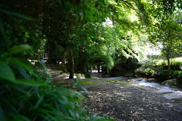 森の中の小道