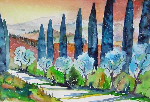 Toskana Zypressen  35.5 x 51