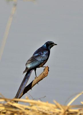 Viele wunderschöne Vögel gibt es zu entdecken und ...