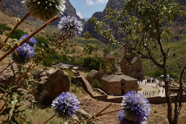 De distels zorgen voor een mooi decor voor Noarvank