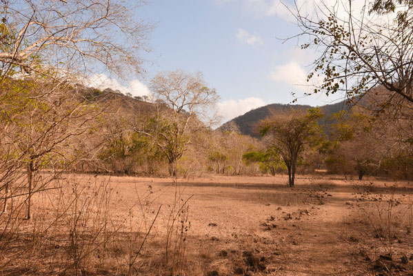 Het droge landschap op Komodo