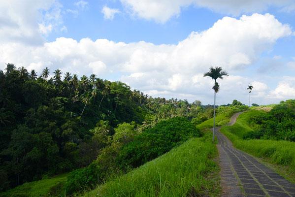 Campuhan Ridge Walk die aanvangt die in Ubud