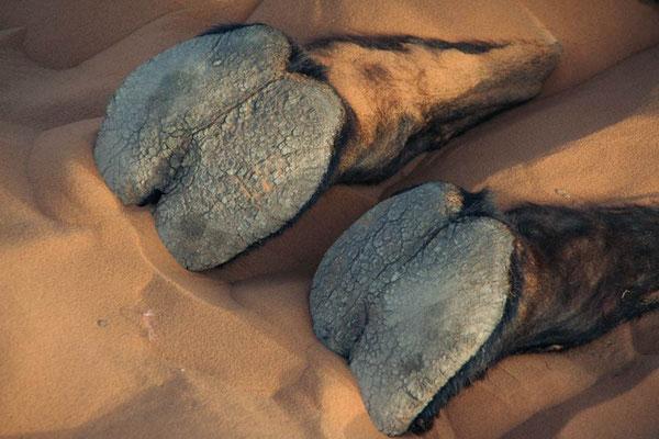 de voetzolen van het schip van de woestijn