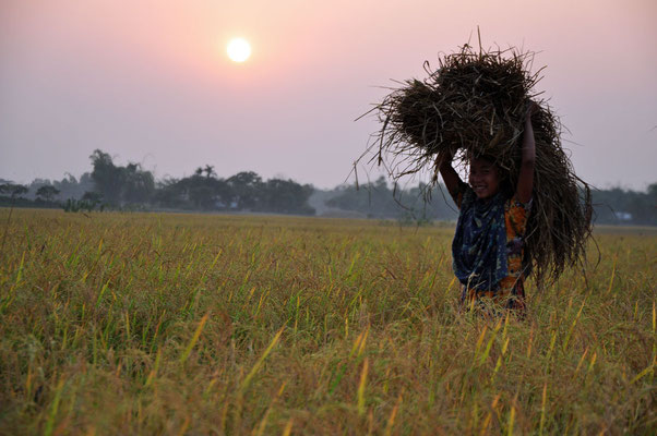 Garo-meisje nabij de Boruakhona mission in Kalmakanda met rijstkolven