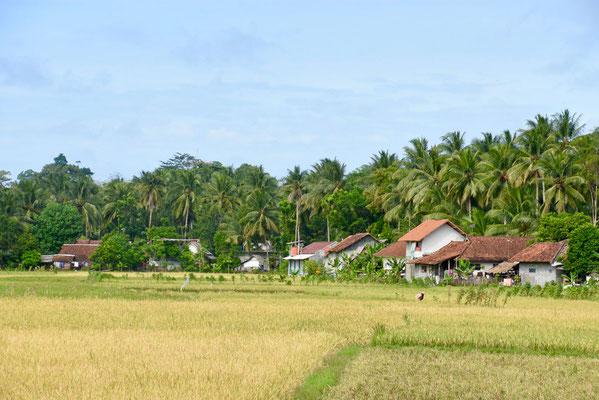 Het mooie hinterland van Batukaras