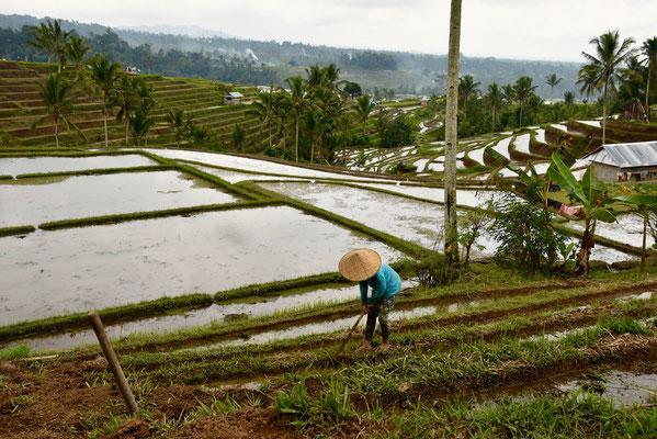 De rijstvelden van Jatiluih - Unesco Werelderfgoed