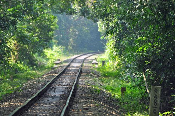 treinspoor doorheen Lawaachara National Parc