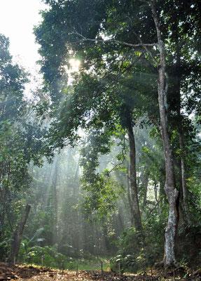 Lawaachara National Parc