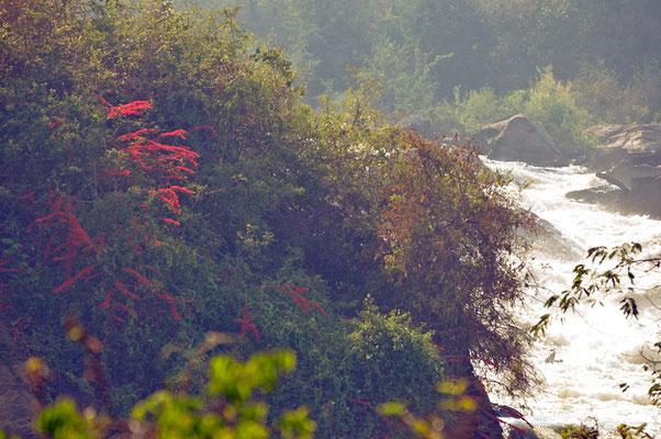 Kapichira-falls in Majete NP