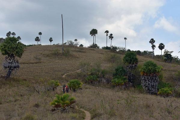 Het schrale landschap op Rinca