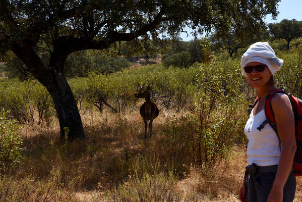 Zwangere herten op enkele meters van Annick