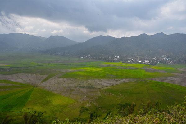 Spiderweb ricefield onderweg van Ruteng naar Labuan Bajo