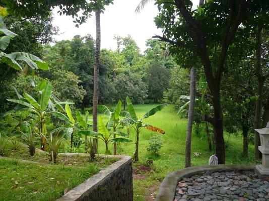 Blick auf einen unbebauten Grundstückteil