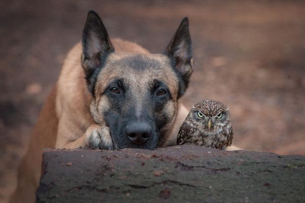 Freundschaft 1