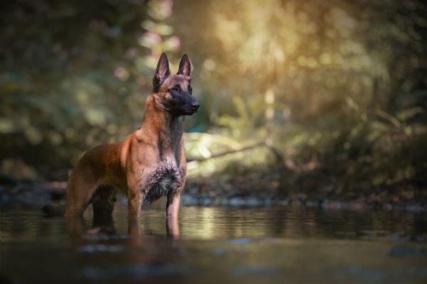 Hunde 8