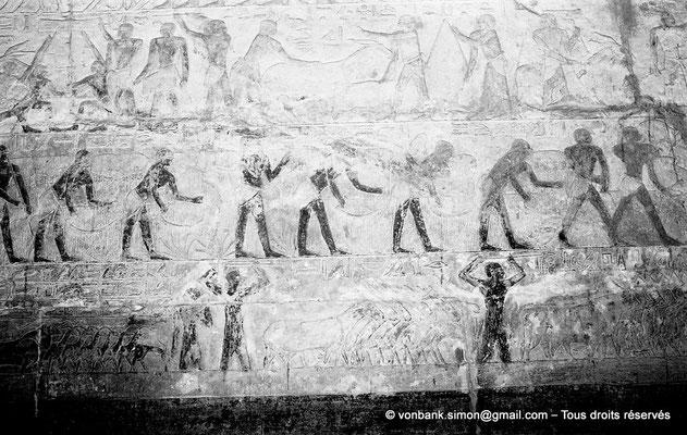 [NB085-1981-17] Saqqara - Mastaba de Mererouka : Registres dévolus à des scènes d'agriculture (Chambre A13, mur Est)