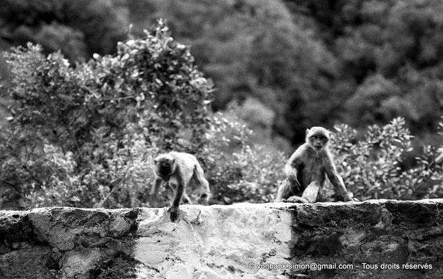 [NB055-1978-15] Gorges de Kherrata - Magots