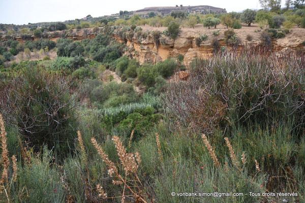 [NU906-2019-1610] Agrigente - Kolymbethra (zone d'une vaste piscine-vivier)
