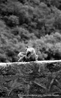 [NB055-1978-12] Gorges de Kherrata - Magots