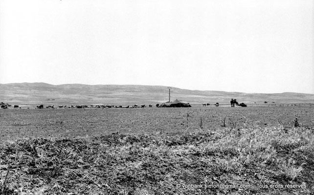 [NB099-1978-36] Désert - Au pied du massif des Aurès, côté Biskra, Tente bédouine