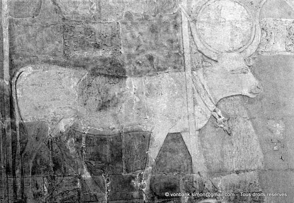 [080-1973-31] Deir el-Bahari : Temple d'Hatchepsout - Vache Hathor coiffée du disque solaire (chapelle d'Hathor)