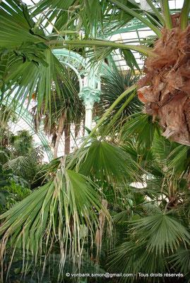 [NU900c-2012-0222] B - Bruxelles - Laeken : Serres royales - Jardin d'hiver