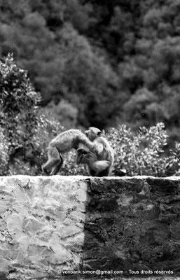 [NB055-1978-14] Gorges de Kherrata - Magots